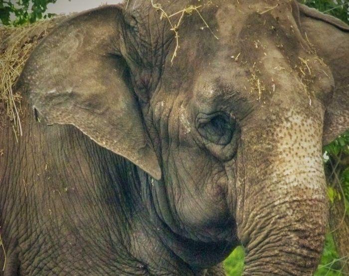 Merry elefanta Arca de Enrimir