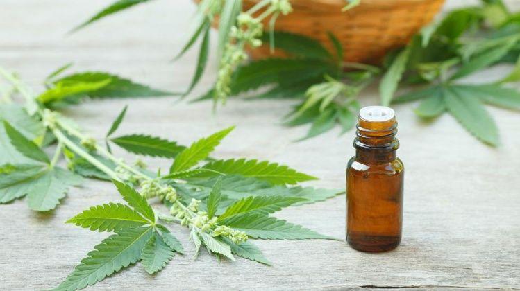 cannabis aceite
