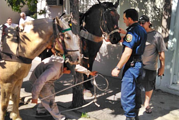 caballo maltratado centro